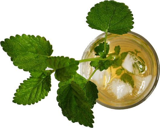 iced tea mint
