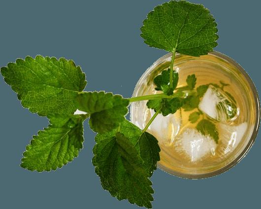 iced tea mint
