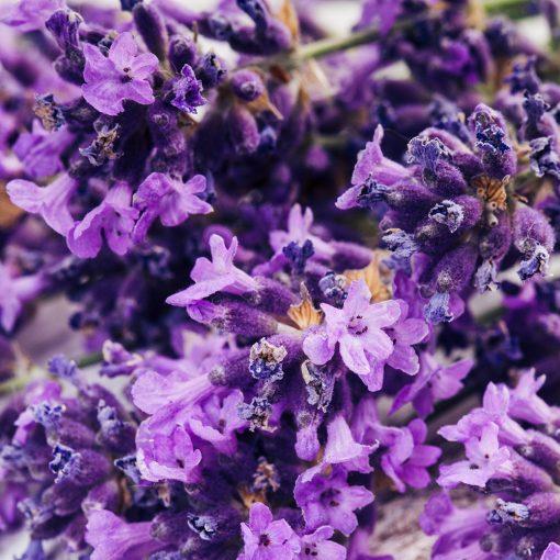 lavender hydrosol floral water natural skin care toner flowers nz